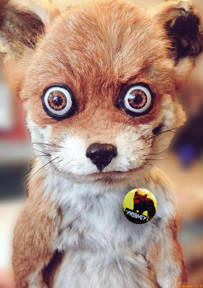 Prodigy-Fox